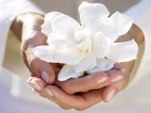 white-flower-in-hands_1600x1200.jpg
